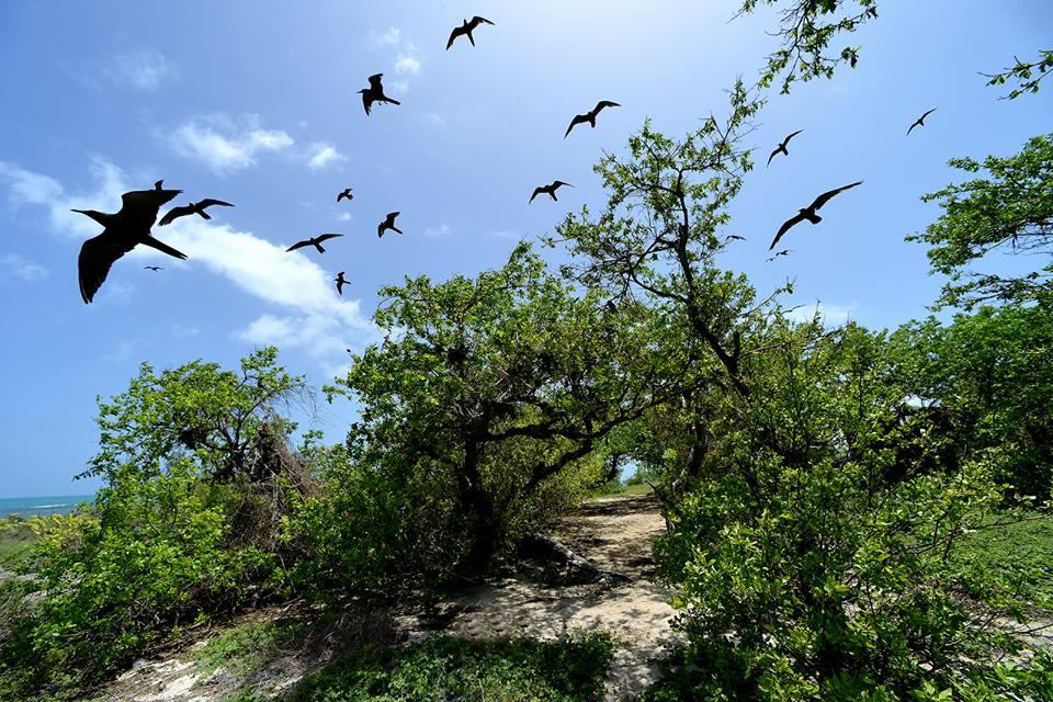 Nesting Birds- Goat Islands
